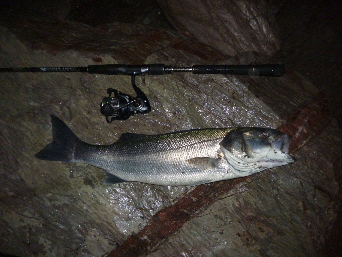 bass on lures in darkness