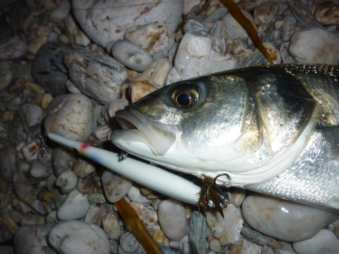 Bass caught on a Needlefish