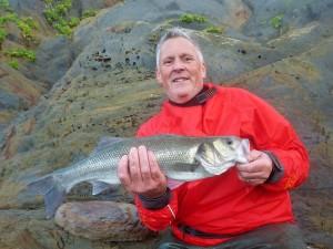 Lure caught bass from Devon