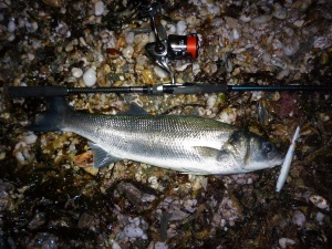 Bass caught on a Jim's Lures Needlefish