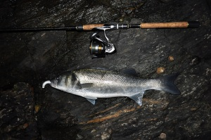 Bass caught on an Albie Snax lure