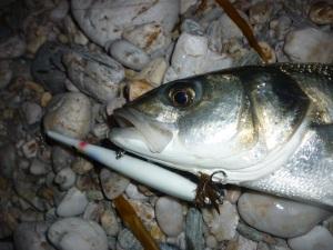 Needlefish and a bass