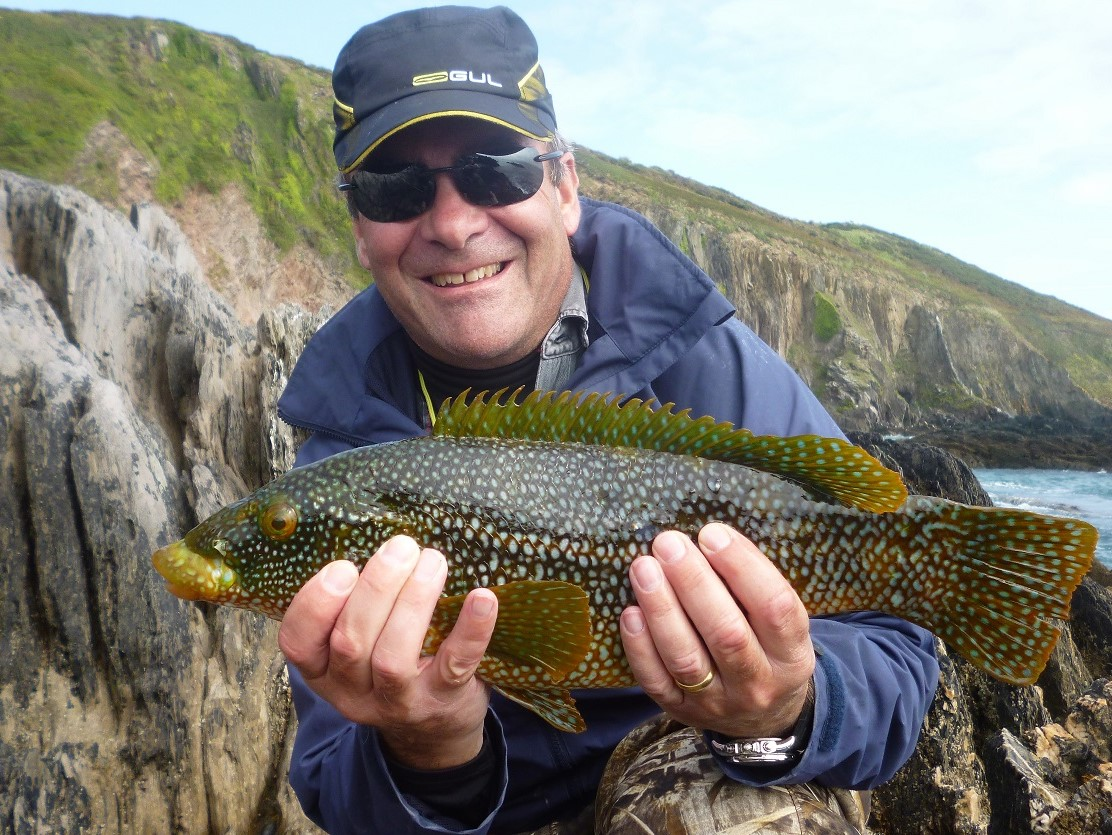 Wrasse caught on a DAM Kick S Minnow