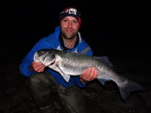Large seabass from south Devon