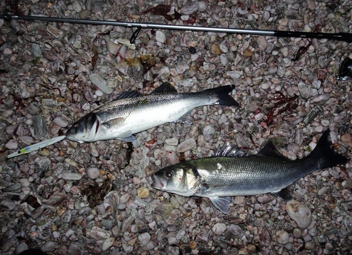 Savage Gear Salt bass fishing rod