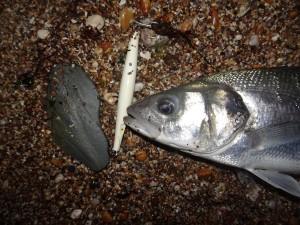 Super Strike N FIsh Needlefish
