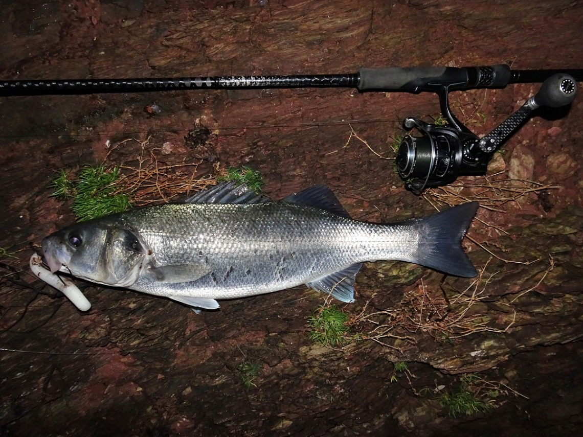 How to catch bass on lures in winter