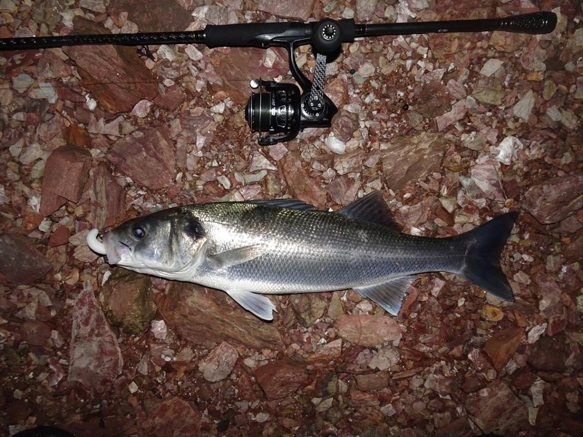 Tailwalk EGinn bass rods