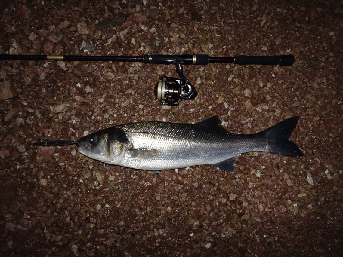 Bass on silver lures at night