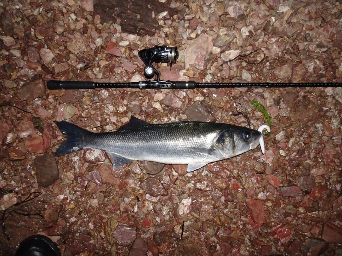 Big bass on white senkos