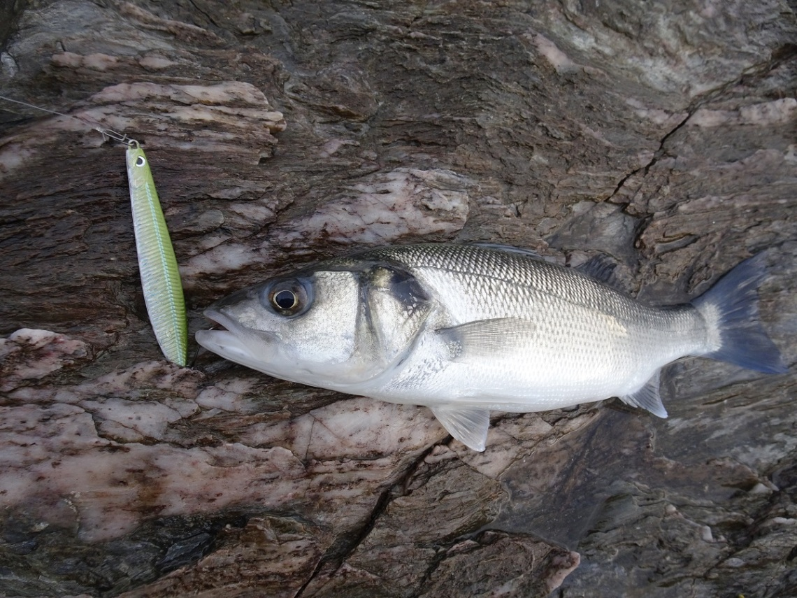 Savage Gear Seeker bass lure